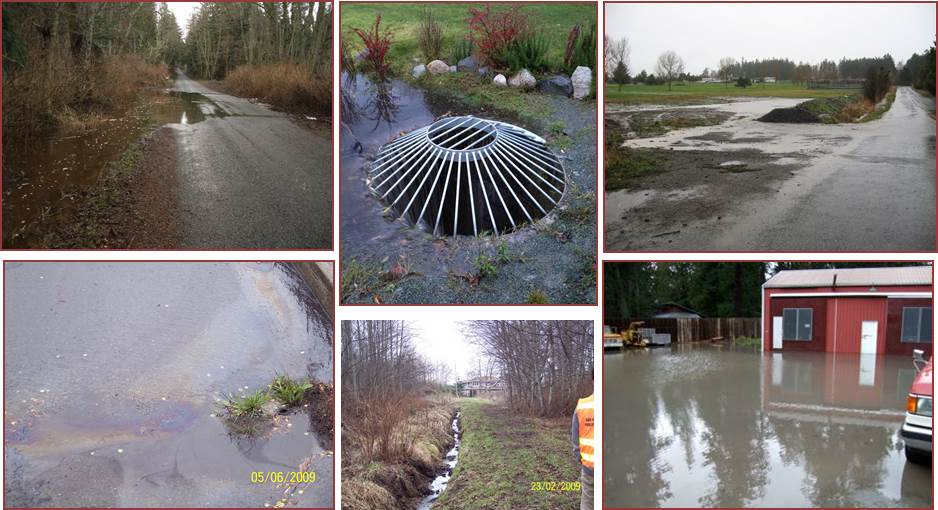 Standing Water Collage